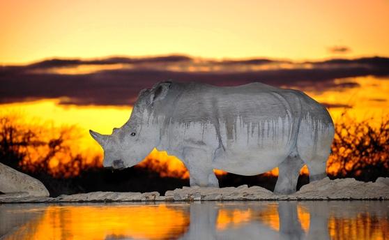 RhinoMAR_4811_IJFR